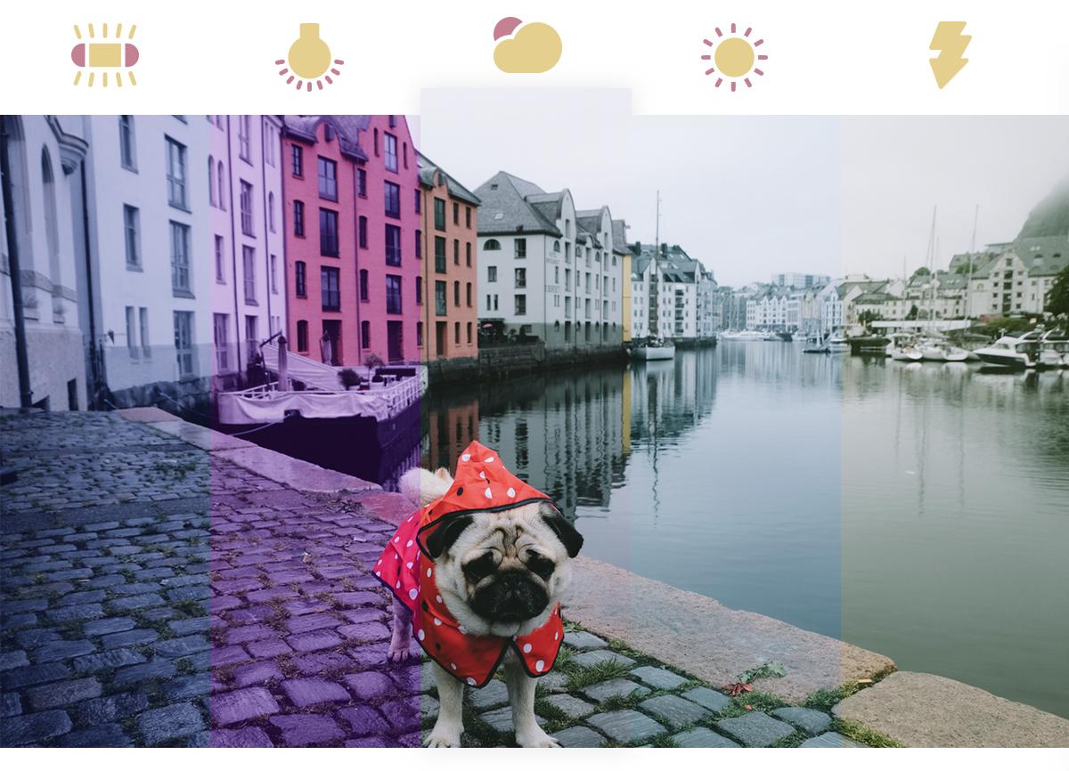 Et bilde av en mops ikledd en rød regnfrakk. Bildet viser hvordan hvitbalansen kan endre tonene i et bilde. Det er delt inn i fem fargetoner med ikoner av ulike kamerainnstillinger over.