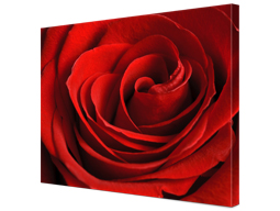 Close up flower canvas Albelli